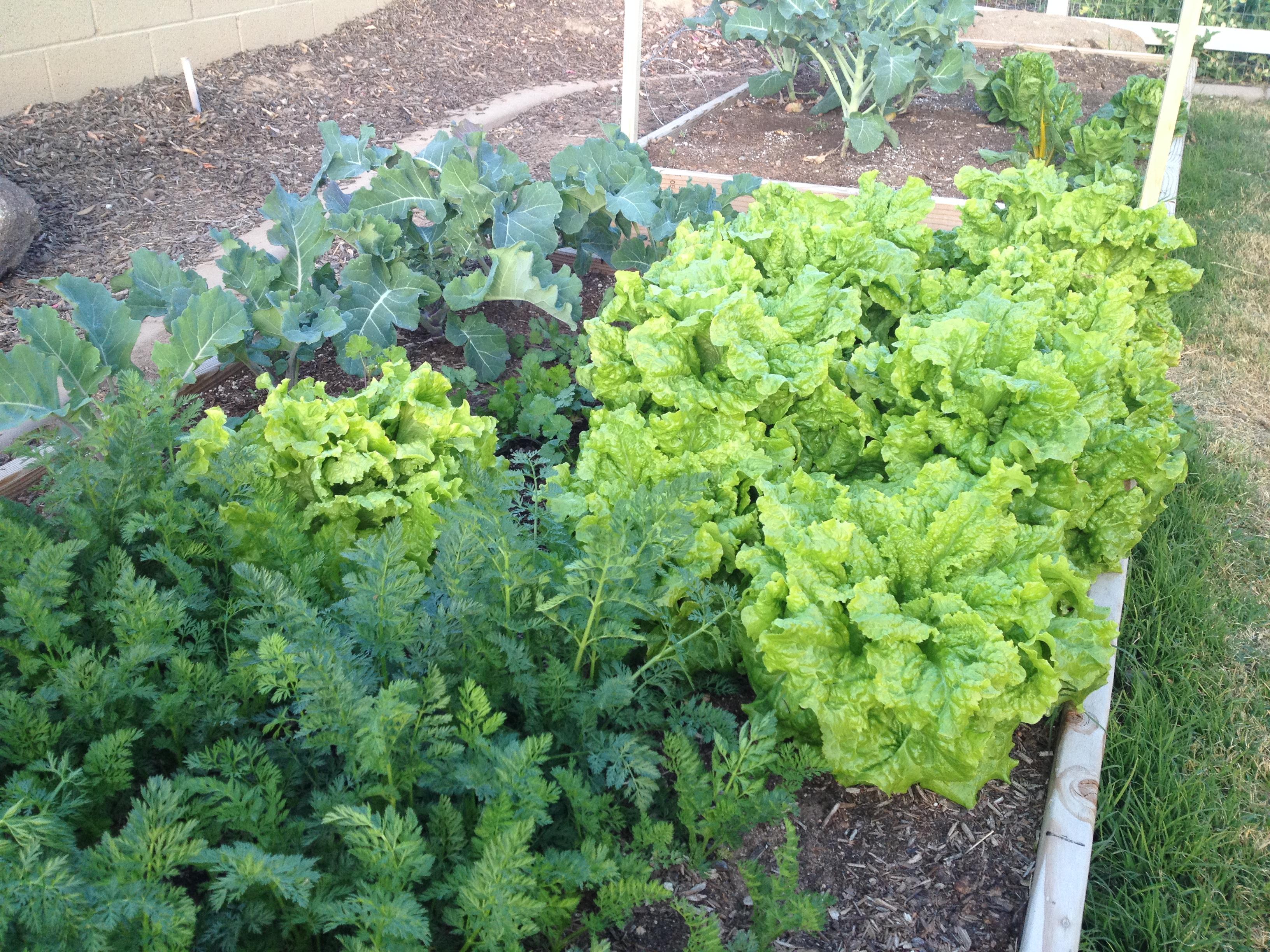 the non winter garden update the jones garden blog
