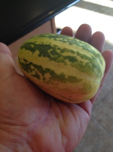 apple melon in my hand